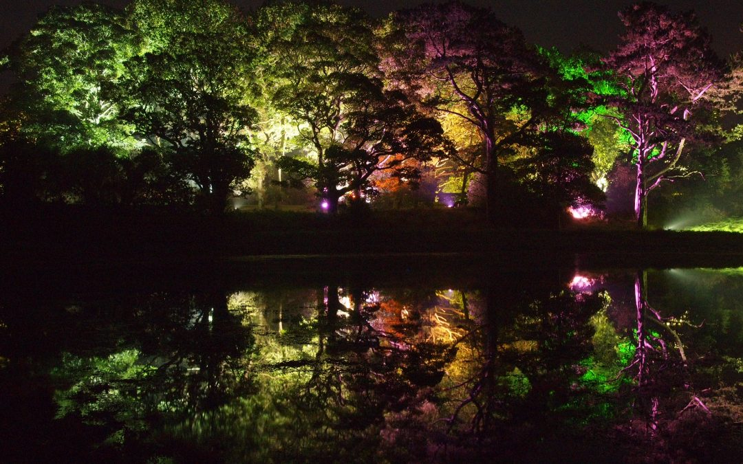 Travelling Treeluminations – Glowing at the Glebe